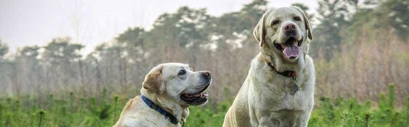 Seguros de Animales de Compañia