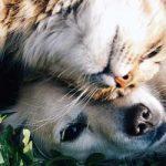 Seguros para fieles amigos: Las mascotas