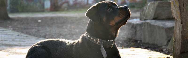 seguros para mascotas obligatorios