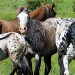 La primavera y los seguros para caballos