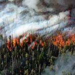 Seguros de Incendios Forestales
